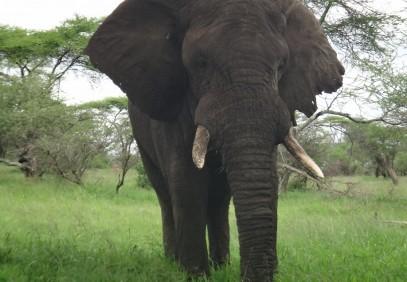 6-Day Great Migration River Crossing Safari