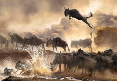 7-Day Safari To See The Great Migration