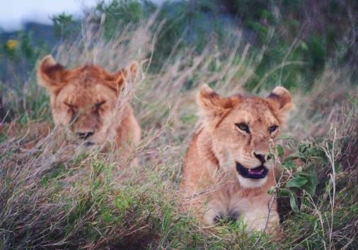 Africa Natural Tours Tanzania National Park (11)