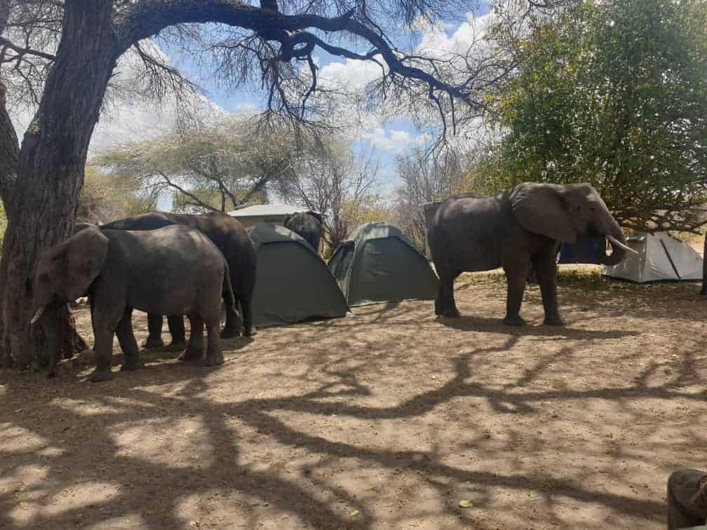 Africa Natural Tours Tanzania National Park (134)