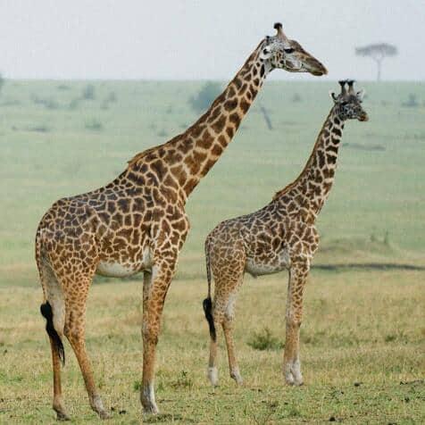 Africa Natural Tours Tanzania National Park (15)