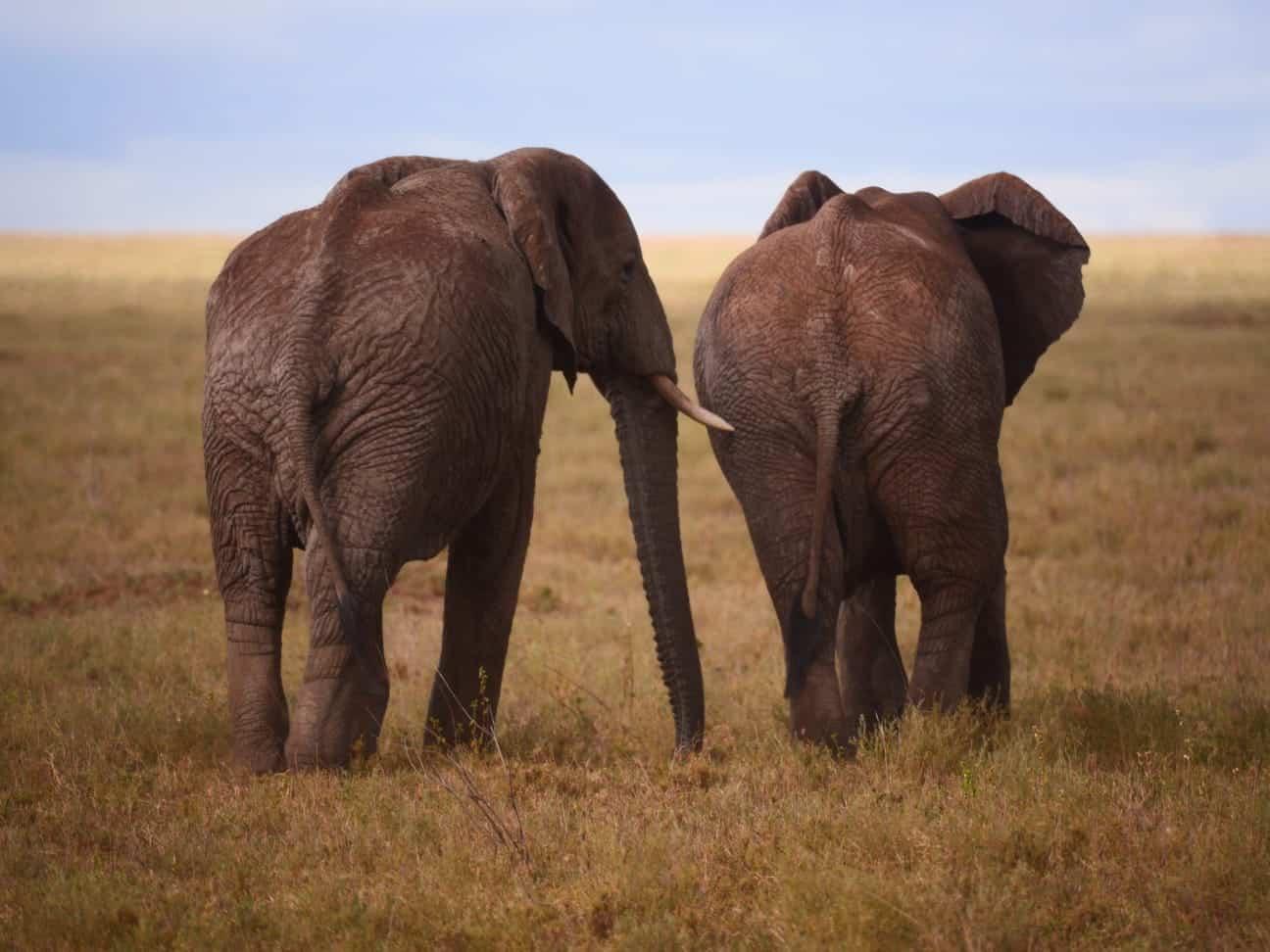 Africa Natural Tours Tanzania National Park (2)