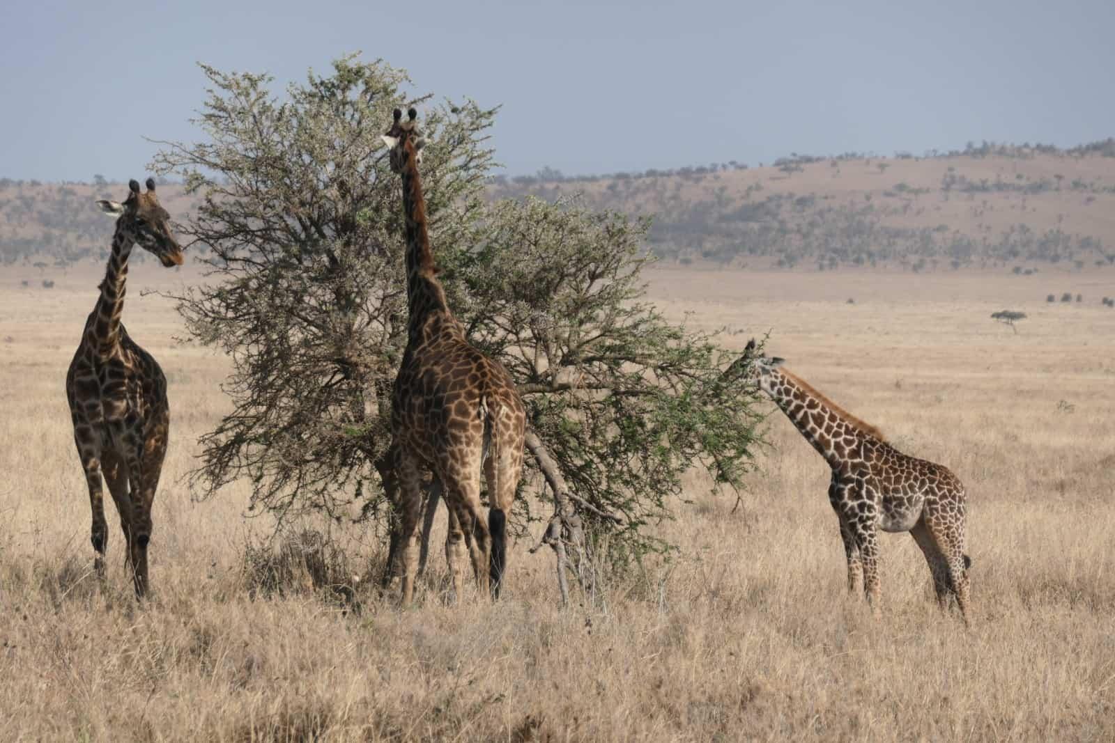 Africa Natural Tours Tanzania National Park (24)