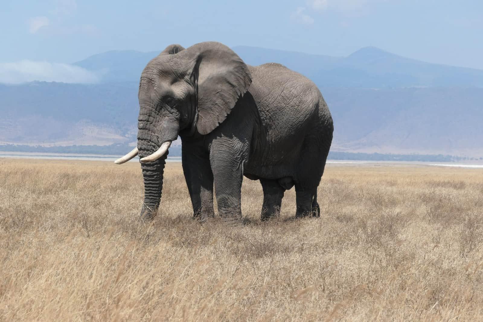 Africa Natural Tours Tanzania National Park (25)