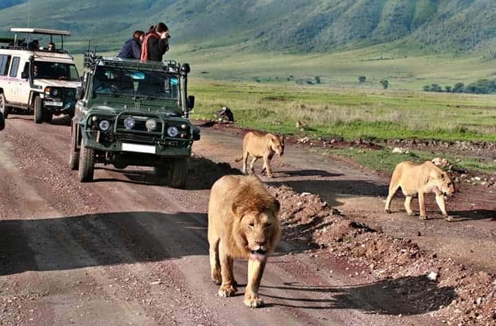Africa Natural Tours Tanzania National Park (44)