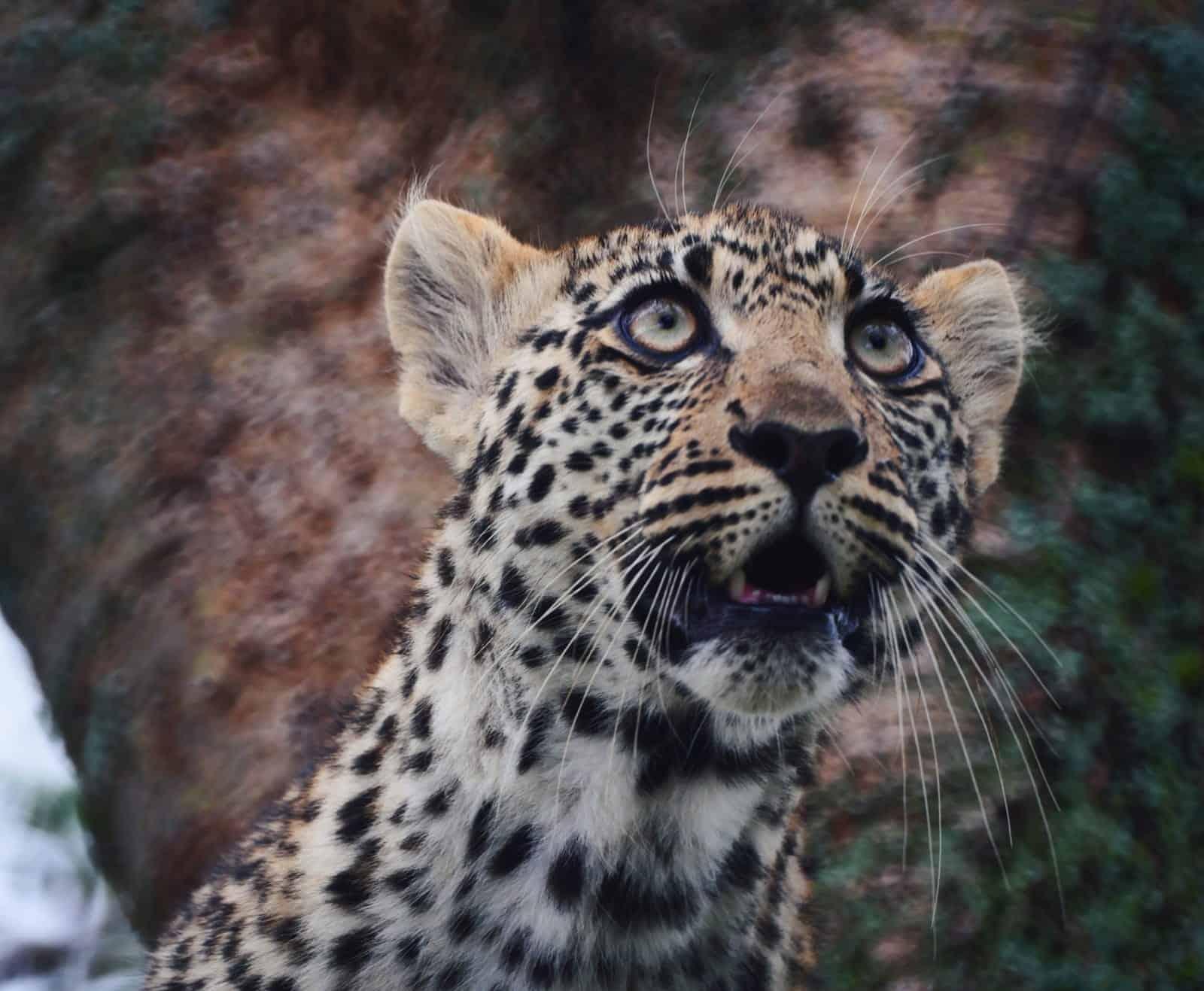 Africa Natural Tours Tanzania National Park (8)