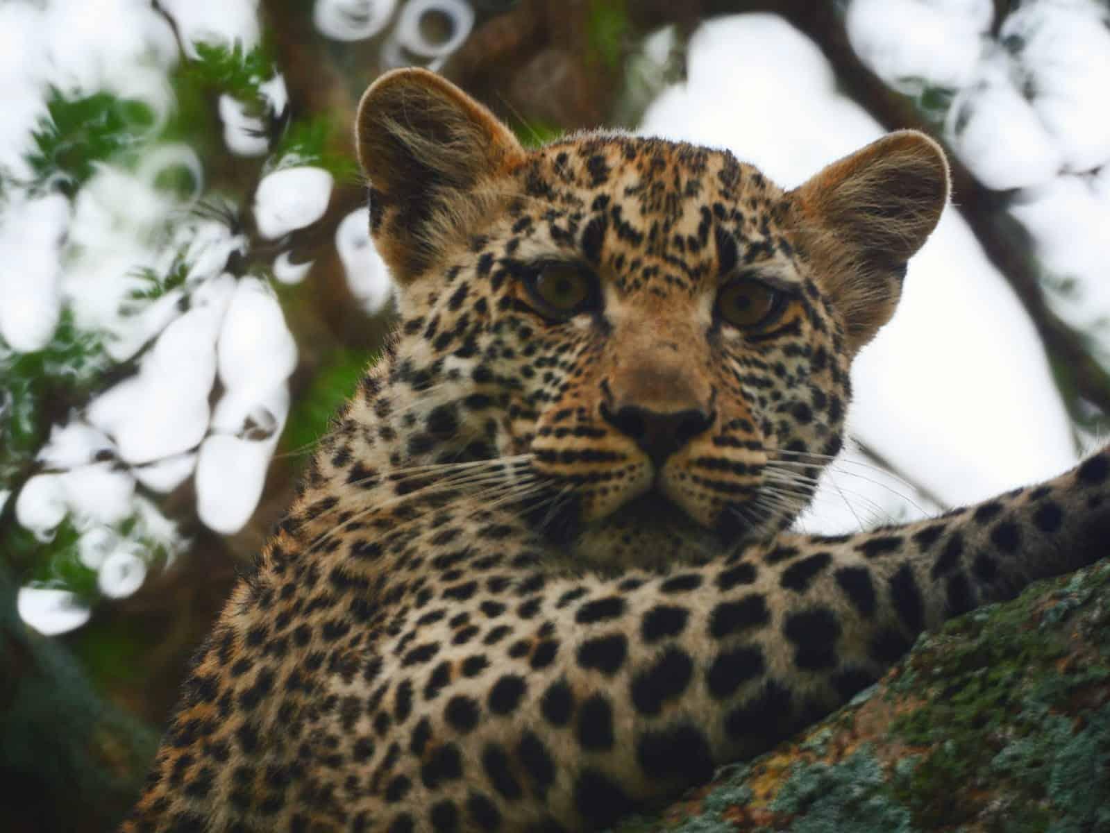 Africa Natural Tours Tanzania National Park (9)
