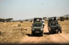 6 Days Luxury Safari in Tanzania