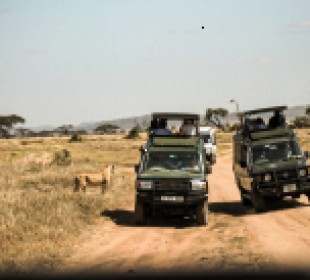 6 Days Luxury Safari in Tanzania