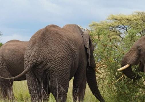 Africa Natural Tours Kilimanjaro Tanzania (28)