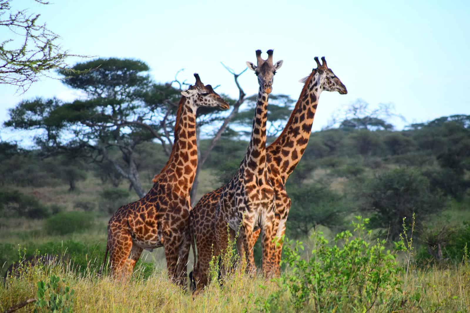 Africa Natural Tours Kilimanjaro Tanzania (33)