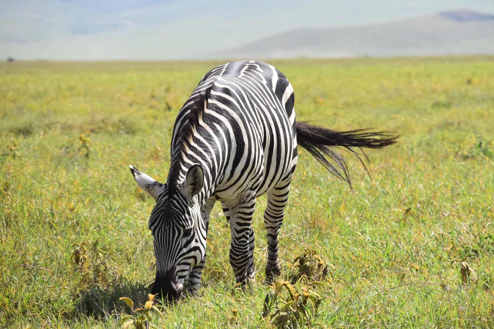 Africa Natural Tours Kilimanjaro Tanzania (52)