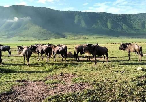 Africa Natural Tours Kilimanjaro Tanzania (6)