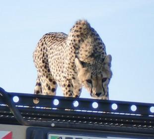 6-Day Serengeti Safari