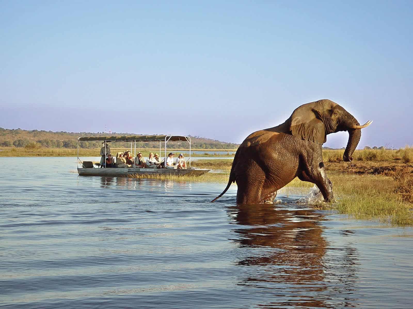 Chobe Safari Lodge Game Cruise