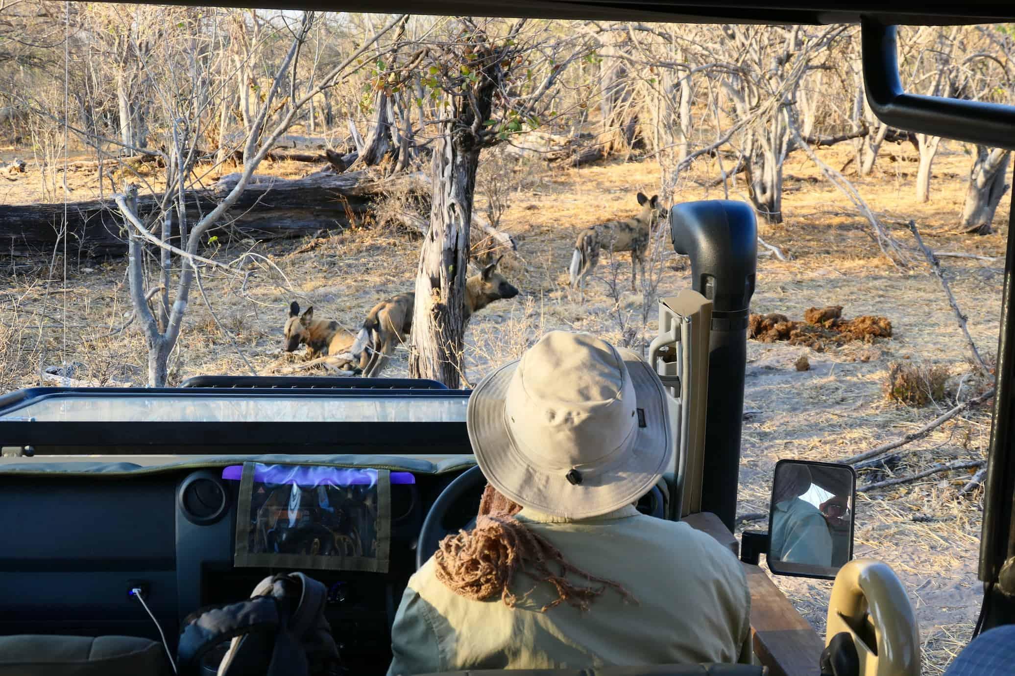 Wild Dogs Brave Africa