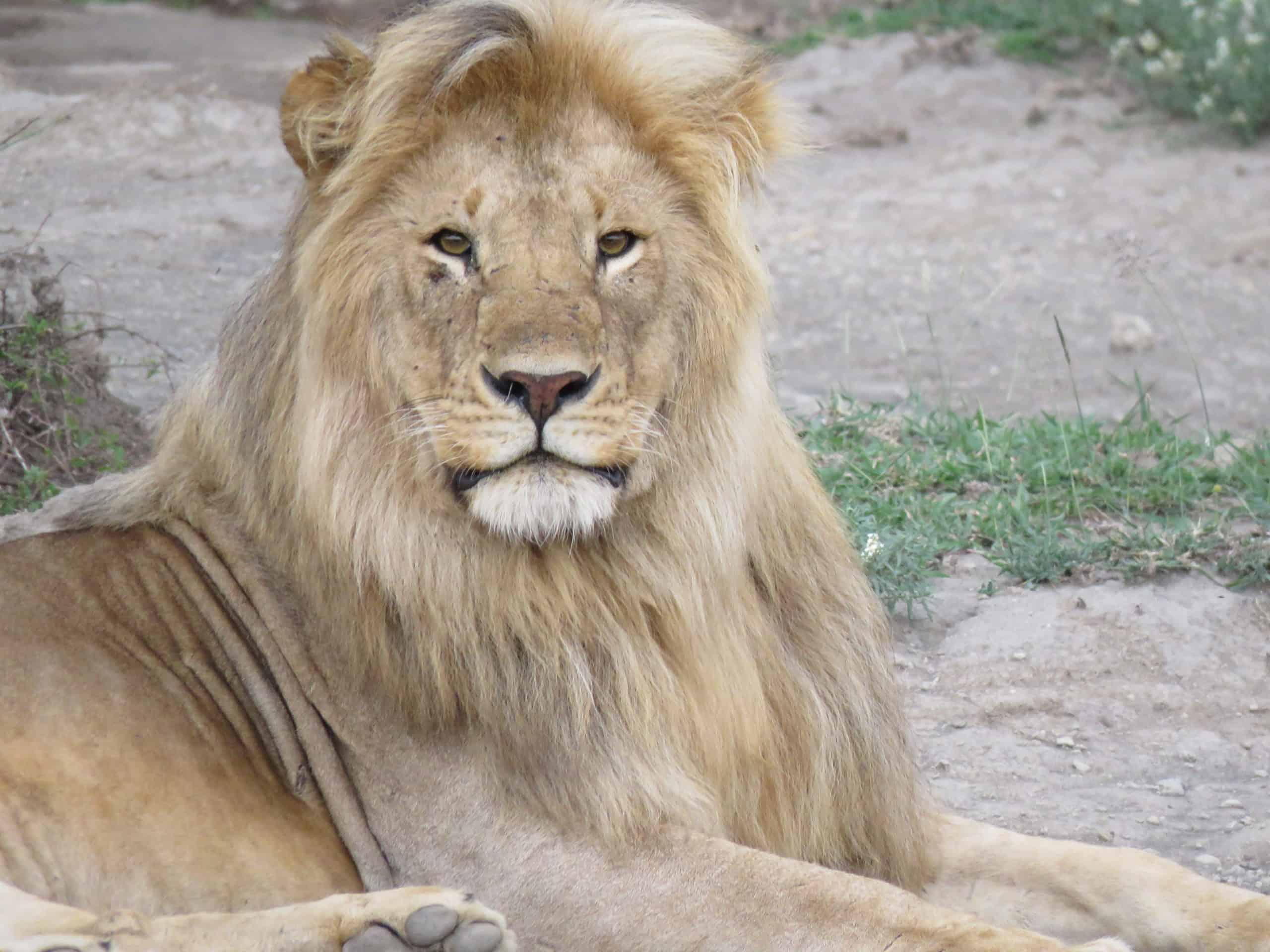 3-Day Amazing Safari to Serengeti and Ngorongoro Crater