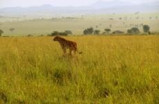 7 Days Kidepo Wildlife and Culture Safari