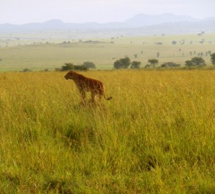 7 Days Kidepo Wildlife and Culture Safari