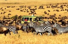 10 Days Budget Safari in Tanzania