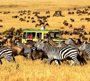 10 Days Budget Safari in Tanzania