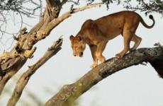 5 Days Best of Tanzania Safari