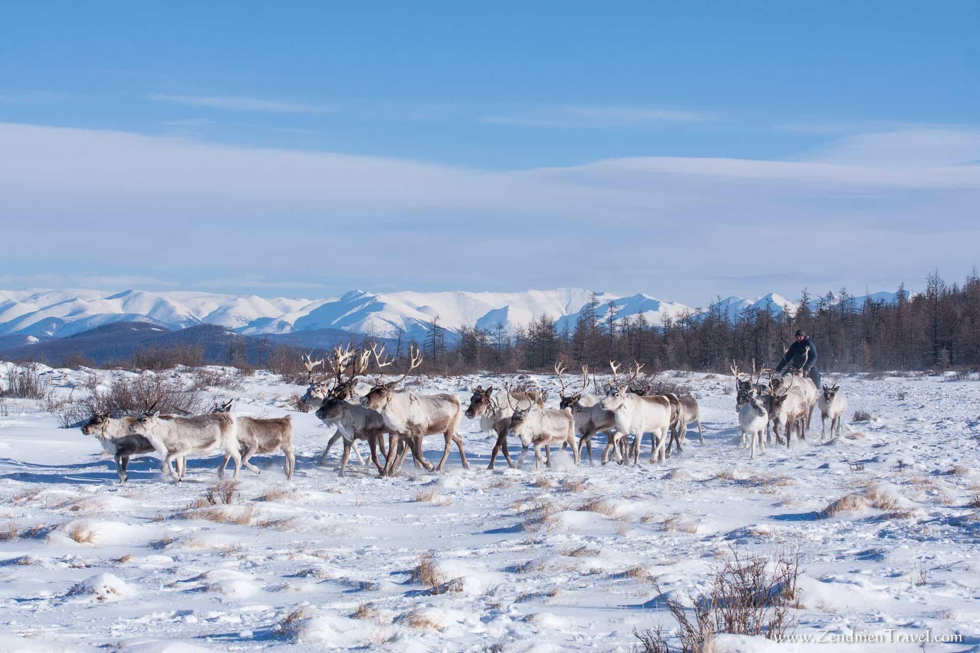 Young Reindeer Herder