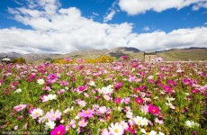 10-Day Trekking and Flower Viewing in Yunnan