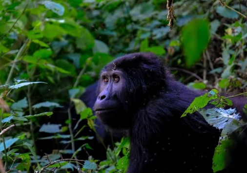 10 Days Uganda Wildlife Tour And Gorilla Trekking Safari Kabira Uganda Safaris
