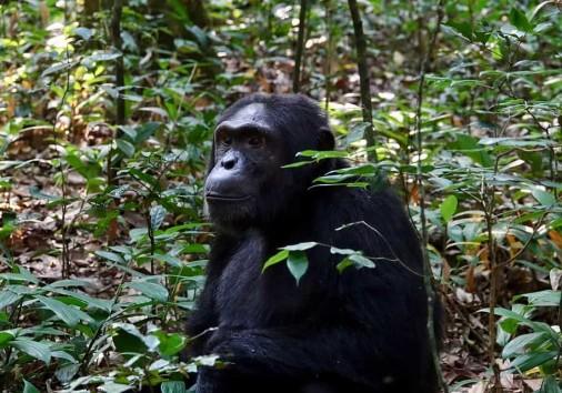 12 Days Uganda Gorilla Trekking Safari, Wildlife Tour Kabira Uganda Safaris