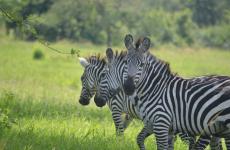 5 Days Tsavo East, Tsavo West & Amboseli Safari