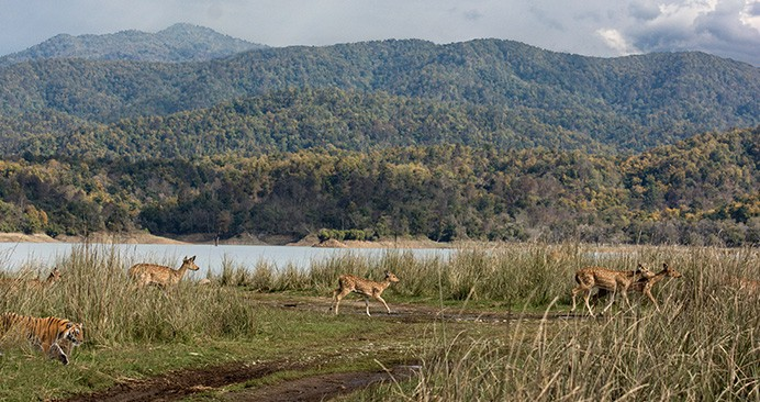 The Top 5 Wildlife Sanctuaries in India for an Amazing Adventure