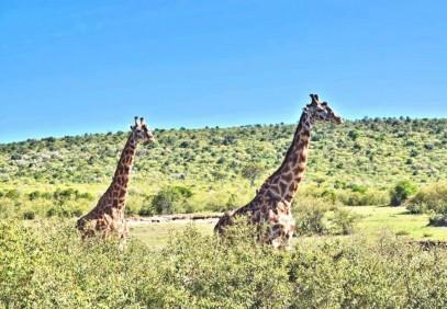 7 Days Masai Mara, Lake Nakuru & Amboseli Safari
