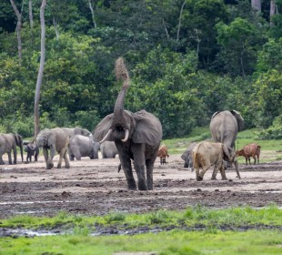 Ndzanga Sangha National Park Safari