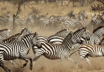 6-Day Budget Wildlife Safari in Tanzania