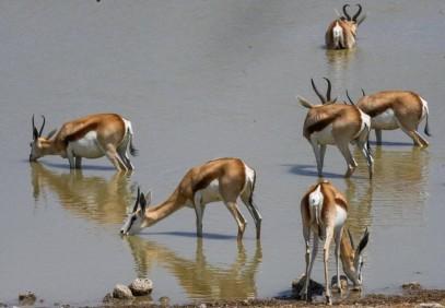 7-Day Namibia Camping Safari