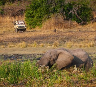 12 Days Victoria Falls, Kafue, South Luangwa, Lower Zambezi Safari
