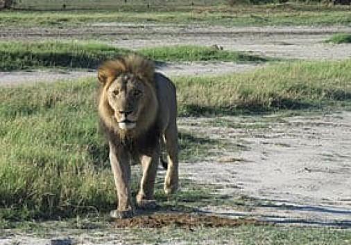 Big Lionn