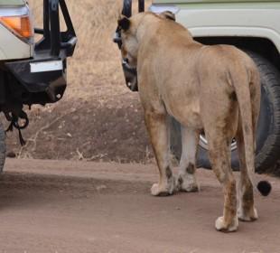 8-Day Cultural Safari
