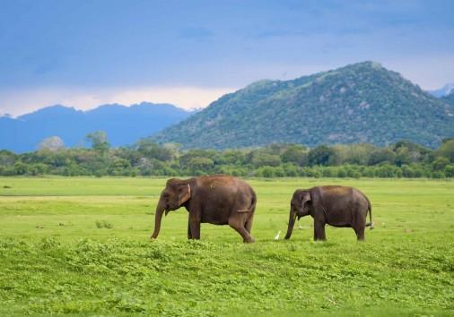 Elephants, Minneriya National Park Shutterstock 728445076