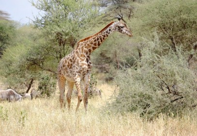 5-Day Camping Safari in Manyara, Serengeti and Ngorongoro