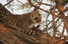 4-Day Camping Safari in Botswana and Zimbabwe