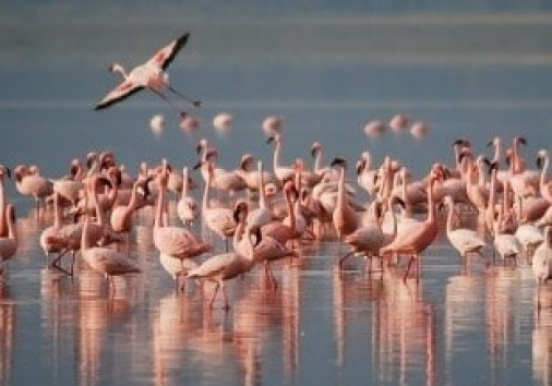 Lake Naivasha Gateways 2 Days