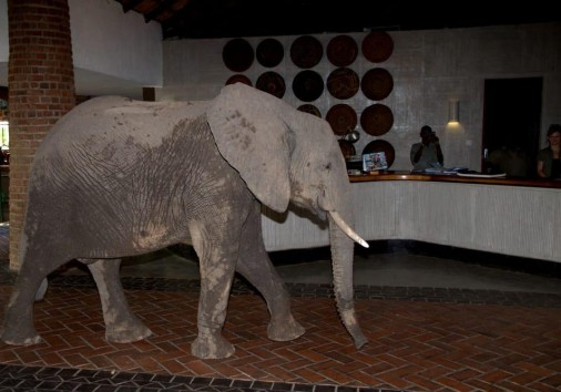Mfuwe Lodge (4)
