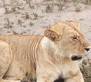 3-Day Tanzania Big Five Safari