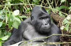 8-Day Gorilla Trekking, Game Viewing and White Water Rafting