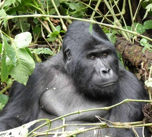 8-Day Gorilla Trekking, Game Viewing and White Water Rafting