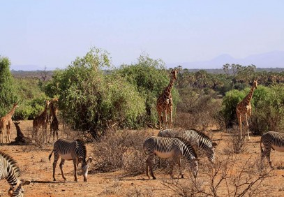 5 Days Aberdares and Samburu Safari
