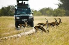 10-Day Kafue Wildlife, Art and Photography Safari