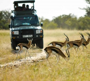 10-Day Kafue Wildlife, Art and Photography Safari